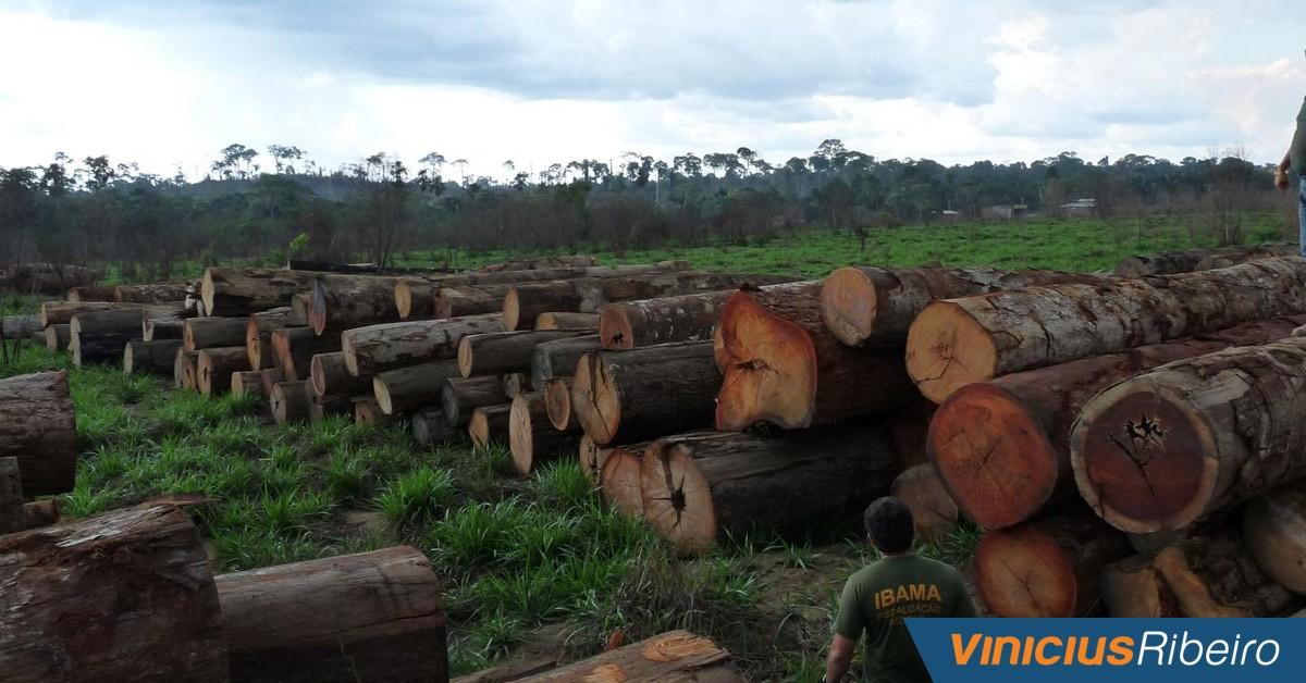 Projeto de Lei nº 471/2015: Comércio ilegal e criminoso de madeira